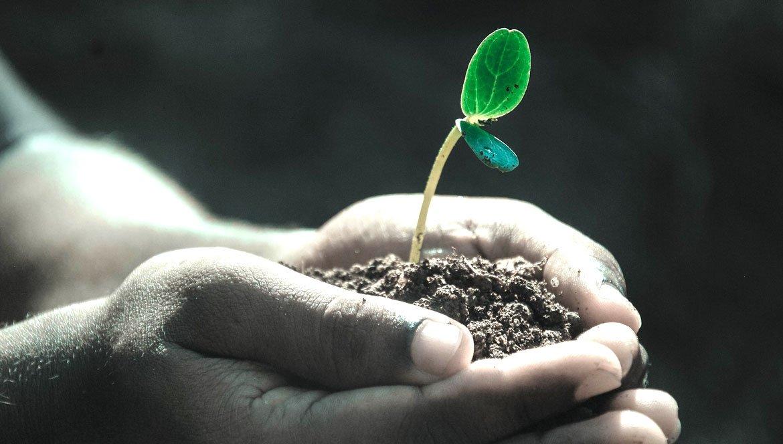 Ökologisch einrichten